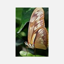 butterfly - iphone4 Rectangle Magnet