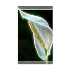 Lighted Lily Decal