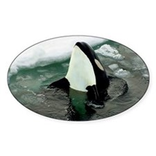 orcaice Decal