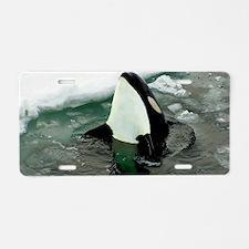 orcaice Aluminum License Plate