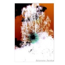 Birch-tree Postcards (Package of 8)