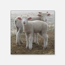 """Frosty Lambs Cropped Square Sticker 3"""" x 3"""""""