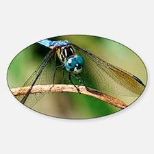 Blue Dasher Skimmer Dragonfly Decal