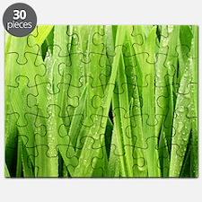 Close Up Grass After A Rainstorm Puzzle