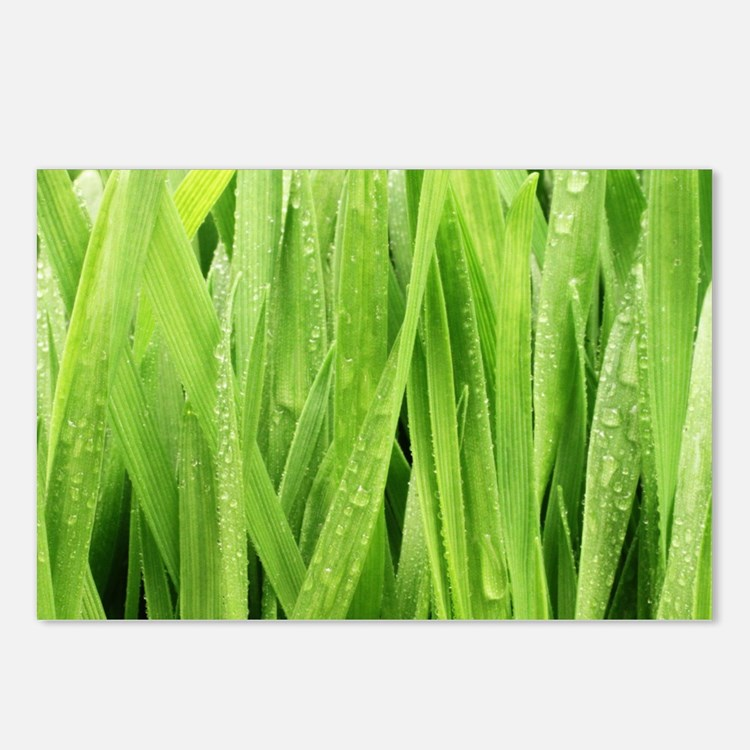 Close Up Grass After A Ra Postcards (Package of 8)