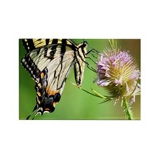 Butterfly Beauty Queen Rectangle Magnet