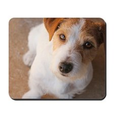 Russell Terrier Mousepad