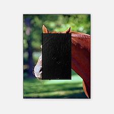 SECRETARIAT Picture Frame