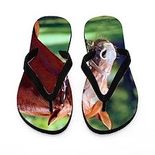 SECRETARIAT Flip Flops