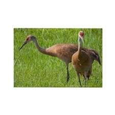 Sandhill Crane Rectangle Magnet