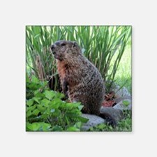 "Groundhog Square Sticker 3"" x 3"""
