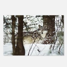 """""""Camouflage"""" Postcards (Package of 8)"""