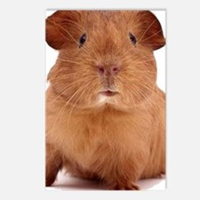 guinea pig face Postcards (Package of 8)