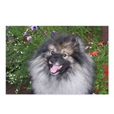 Keeshond Smiling Postcards (Package of 8)