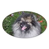 Keeshond Stickers & Flair