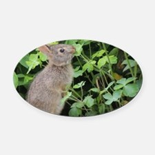 Baby Bunny Munch Oval Car Magnet