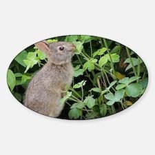 Baby Bunny Munch Sticker (Oval)