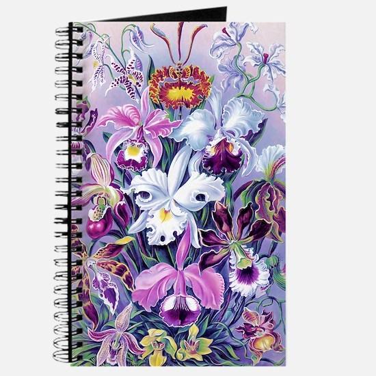 Cattleya, Lady Slipper Orchids 34 X 48 Pos Journal