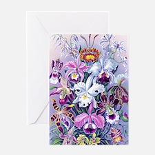 Cattleya, Lady Slipper Orchids 34 X  Greeting Card