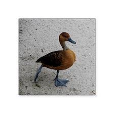 "Posing duck Square Sticker 3"" x 3"""