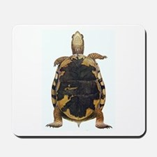 Box Turtle Straight Up Mousepad
