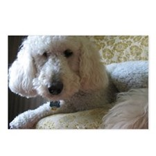 Goldendoodle Postcards (Package of 8)
