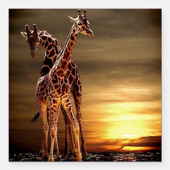"Giraffes Square Car Magnet 3"" x 3"""