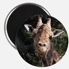 Helaine's Smiling Giraffe Magnet
