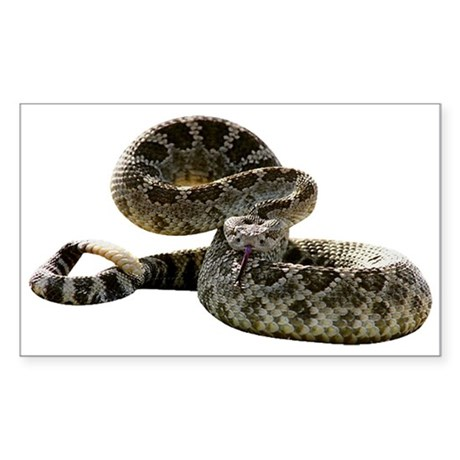 Rattlesnake Photo Rectangle Sticker