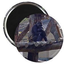 """gorilla's treehouse 2.25"""" Magnet (100 pack)"""
