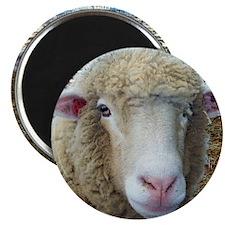 Ewephorics Sheep Stomper-Award Winning Phot Magnet