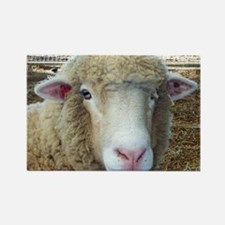 Ewephorics Sheep Stomper-Award Wi Rectangle Magnet