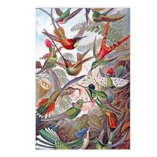 22x14 Exotic Hummingbirds Postcards (Package of 8)