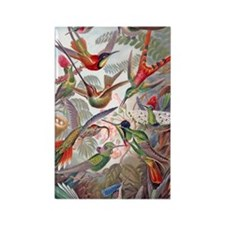 22x14 Exotic Hummingbirds RECT De Rectangle Magnet