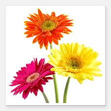 "Daisy Gerbera Flowers Square Car Magnet 3"" x 3"""