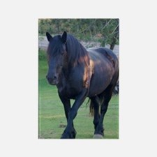 Black Percheron Mare at Pasture Rectangle Magnet