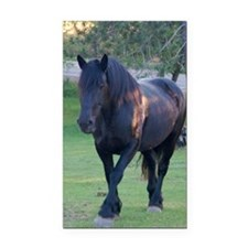 Black Percheron Mare at Pastu Rectangle Car Magnet