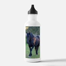 Black Percheron Mare a Water Bottle