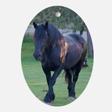 Black Percheron Mare at Pasture Oval Ornament