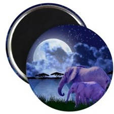 Contemplative Elephants Magnet