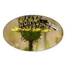 Hoverfly Decal