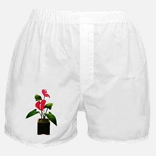Red Anthurium in Planter Boxer Shorts
