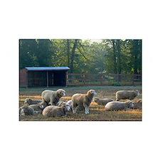 Horned Dorset Sheep Barn Scene ea Rectangle Magnet