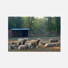Horned Dorset Sheep Barn Scene ea Rectangle Magnet