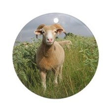 Ewe in the tall grass Round Ornament
