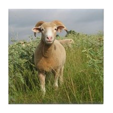 Ewe in the tall grass Tile Coaster