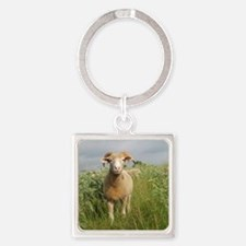 Ewe in the tall grass Square Keychain