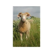 Ewe in the tall grass Rectangle Magnet