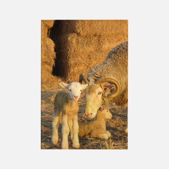 Horned Ewe with Twins Rectangle Magnet