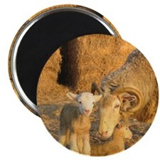 Horned Ewe with Twins Magnet